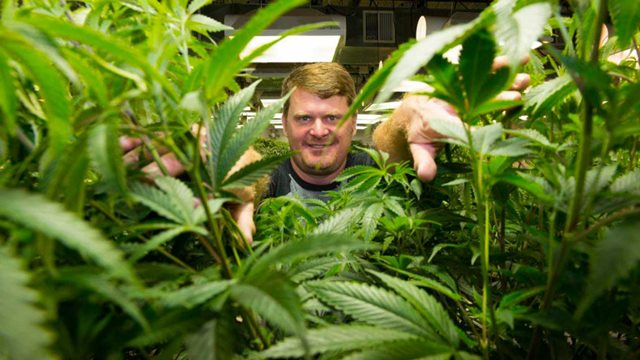 Floyd landis cannabis tour de francia