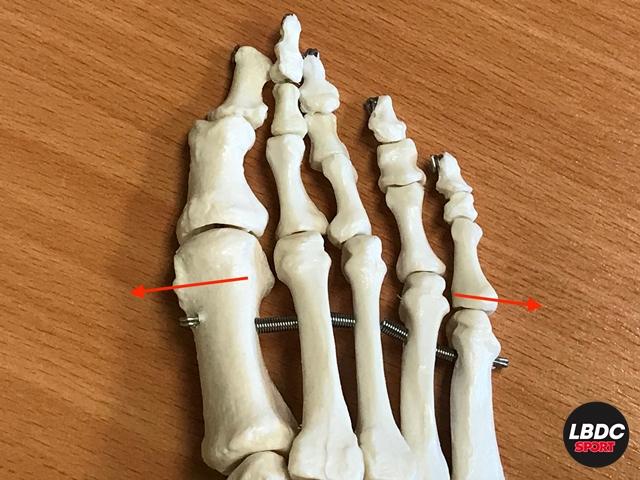 Sensación en ensanchamiento por debilidad de la musculatura corta del pie